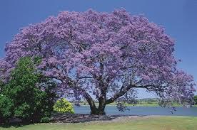 Pohon, sungai, dan Taman Surga Lebih baik dari ini