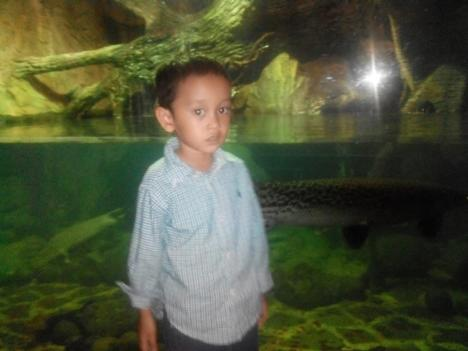 TMII Yusuf Ikan Pirarucu